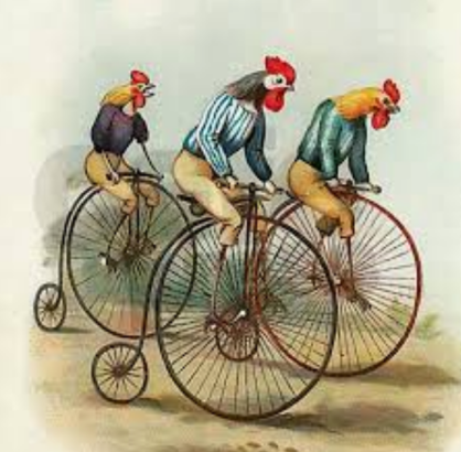 Roosters on pennyfarthings in a race